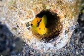 stock photo of discard  - A pair of fish inside a discarded glass bottom on a black - JPG