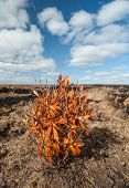 pic of boggy  - lone  bush in a Peat bog landscape in county Kerry - JPG