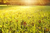 picture of grassland  - Green grass texture from a field - JPG