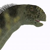 image of herbivore animal  - Camarasaurus was a herbivorous sauropod dinosaur that lived during the Jurassic Era of North America - JPG