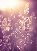 pic of wildflowers  - Wildflowers at sunset on the meadow close up