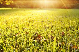 foto of grass  - Green grass texture from a field - JPG