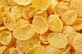 image of zea  - Corn flakes close up - JPG