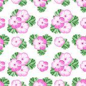 image of geranium  - Vintage seamless pattern with pink geraniums on white background - JPG