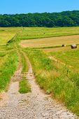 pic of dirt road  - An old dirt road leading up to the woods - JPG