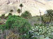 stock photo of canary-islands  - The green valley of Vega de Rio Palmas on the Canary Island Fuerteventura - JPG