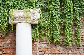 picture of vicenza  - White stone column in the external courtyard of the olimpic theater in Vicenza - JPG