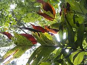 picture of jungle  - Misty jungle rainforest scene - JPG