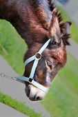 picture of wild donkey  - Beautiful portrait of a donkey photographed close up - JPG