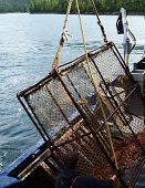 stock photo of crab  - An Alaskan King Crab pot is raised into the boat with the days catch - JPG
