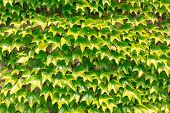 pic of spiky plants  - Wall of plants with the same green spiky leaves - JPG