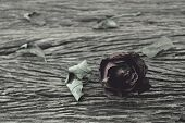 stock photo of broken hearted  - Dried Rose on old wooden background broken heart concept vintage style - JPG