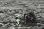 picture of broken heart flower  - Dried Rose on old wooden background broken heart concept vintage style - JPG