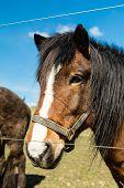 image of brown horse  - Close - JPG