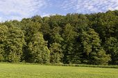 picture of bavaria  - Spring landscape with trees on a sunny day in summer - JPG