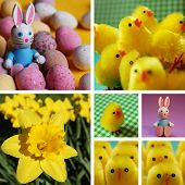 A collection of easter photography.