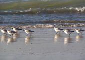 Pequeñas aves marinas
