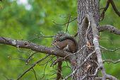 Squirrel Hiding In A Tree