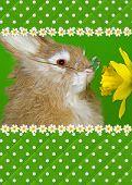 Fun Bunny