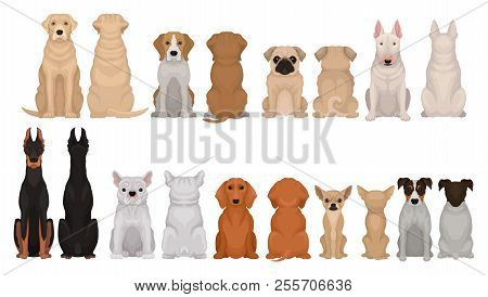 Set Of Dogs Of Different