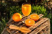 Freshly Squeezed Orange Juice. Fresh Citrus Juice. Mandarin Juice. Summer Drink poster