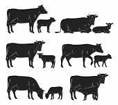 Vector Cow And Calf Black Silhouettes poster