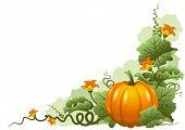 Vector illustration of ripe october pumpkin