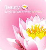 High quality beauty background pink lotus flower with a place for your text - forces of nature theme