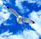 Sea gull in a blue sky