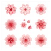 vector pink cherry blossom flowers collection isolated on white background, great decoration element