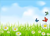 vector green grass and daisies on a background of blue sky with butterflies