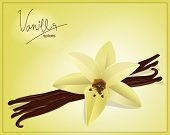 vector flower and vanilla pods on a yellow background