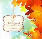 vector autumn congratulatory and festive background with leaves and blue sky