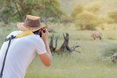Young Man Traveler And Photographer Taking Photo Of Wildlife Animal In African Safari. Wildlife Phot poster
