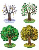 Tree during different seasons of year