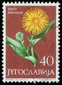 YUGOSLAVIA - CIRCA 1958: A stamp printed in Yugoslavia shows elecampane, series, circa 1958