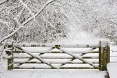 Wooden Gate In Snow