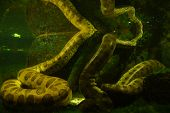 stock photo of anaconda  - Prague Zoo offers this bizarre cage for snakes - JPG