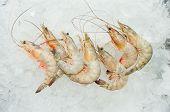 Fresh Shrimp in the ice from Ecuador