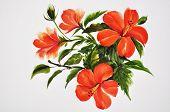 Hot Red Hibiscus