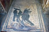 Dog Mosaic In Pompeii
