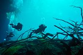 stock photo of cenote  - Divers in the cenote Aktun Ha - mexico