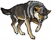 stock photo of lupus  - aggressive wolf - JPG
