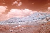 A field is in an infra-red color,