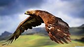 stock photo of eagles  - A beautiful eagle flying through the air - JPG