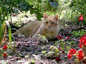 Cat Resting In The Summer Flower Garden