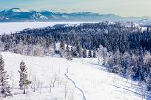 Schneeschuhtrail Taiga-Landschaft Yukon t Kanada