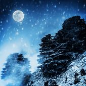 Beautiful winter landscape, big pine trees on high snowy mountain in dark night, magical moon light,