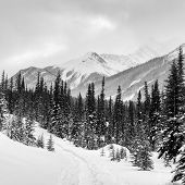 Winter in the Canadian Rockies