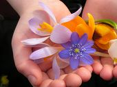 A Handful Of Spring
